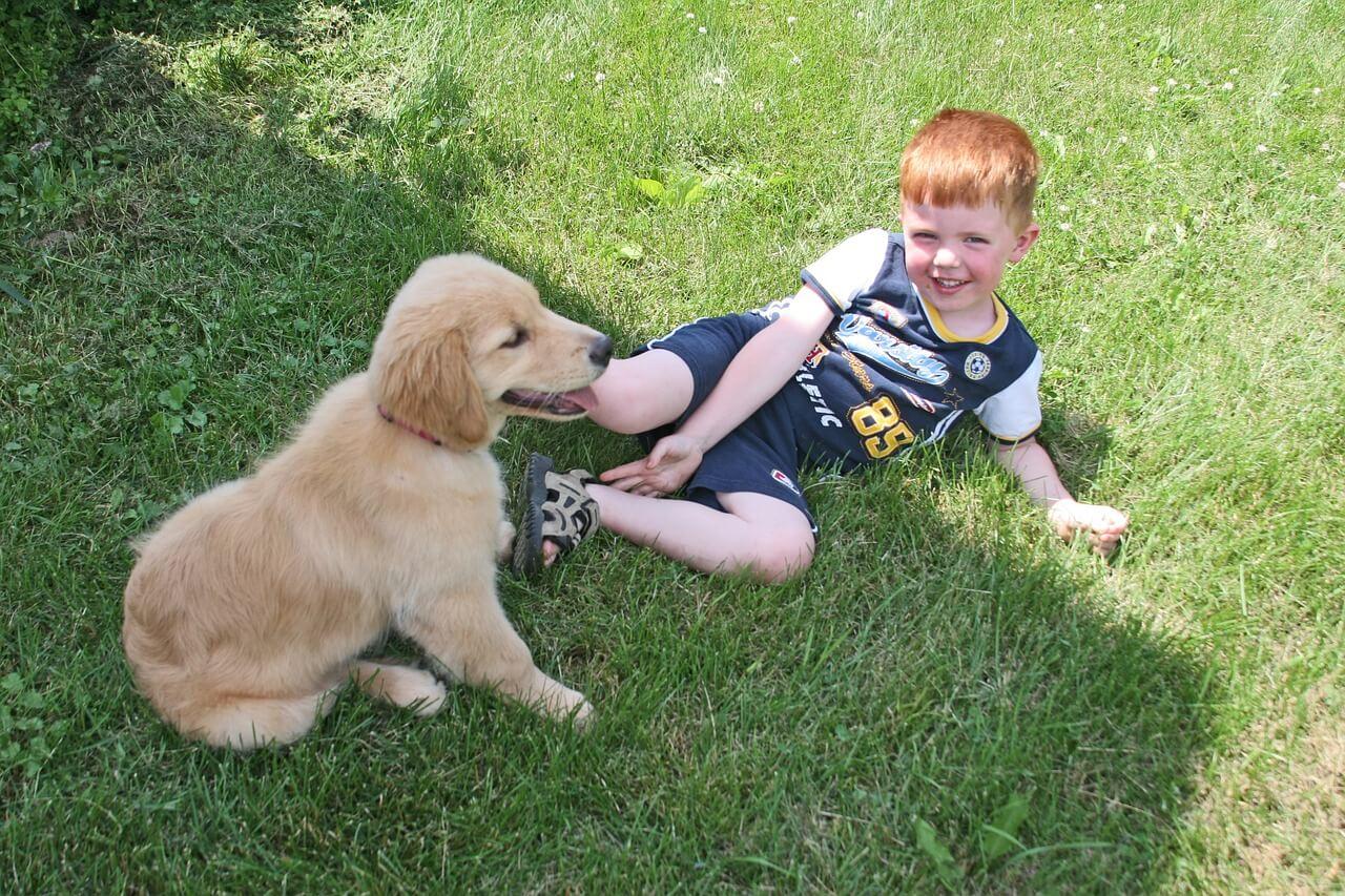 Hund, Kind